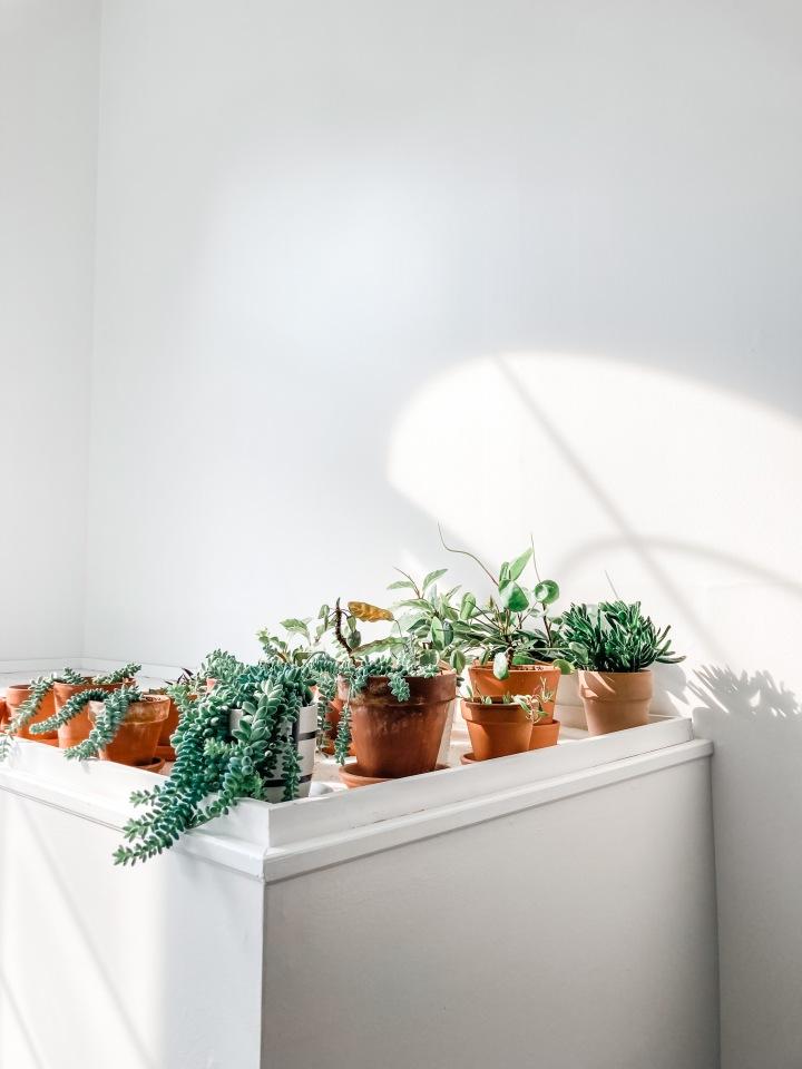 My Journey to 100Houseplants